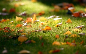 Wallpaper grass, fall, autumn, leaves, lawn