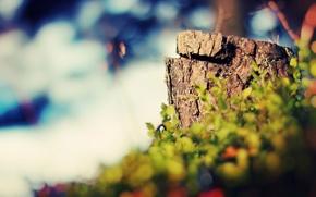 Picture greens, grass, Nature, stump
