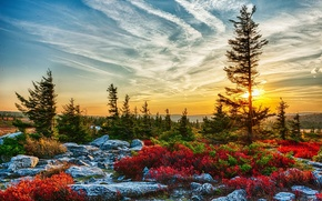 Picture trees, stones, ate, USA, the rays of the sun, the bushes, West Virginia