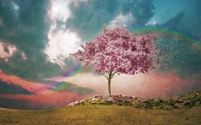 Picture the sky, the wind, rainbow, watercolor, flowering, texture, pink tree