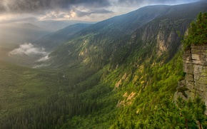 Picture forest, mountains, fog, river, morning, valley