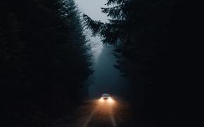 Wallpaper machine, forest, darkness, light, lights
