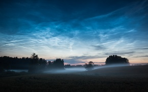 Picture trees, fog, dawn, hills, morning