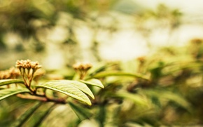 Picture leaves, macro, trees, background, Wallpaper, plant, blur, leaf, wallpaper, leaves, widescreen, background, leaves, bokeh, full …