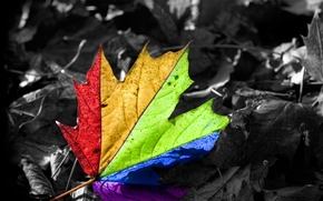 Wallpaper leaf, rainbow, happiness