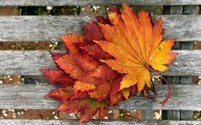 Picture autumn, macro, foliage, Board