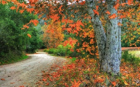 Picture leaves, forest, autumn, branches, trees, road, USA