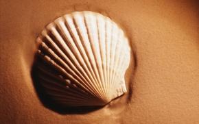 Wallpaper Shell, sand