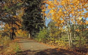 Picture road, autumn, leaves, trees, Nature, road, trees, autumn, leaves, fall