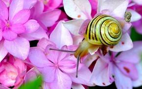 Wallpaper macro, flowers, snail, horns, hydrangea