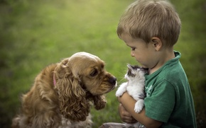Picture cat, dog, boy