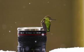 Picture snow, macro, birds, animal, lens, situation, Hummingbirds