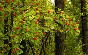 Picture forest, landscape, nature