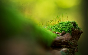 Picture grass, macro, moss, razmytost