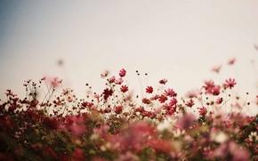 Picture flowers, stalks, flowers field