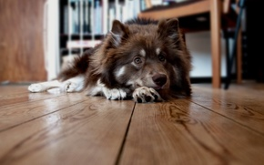 Picture house, dog, floor