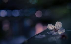 Picture flower, macro, bokeh, Sakura