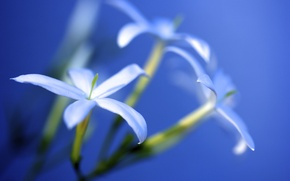 Picture light, flowers, lighting, white, solar, Jasmine, morning