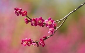 Wallpaper flowers, branch, spring, garden