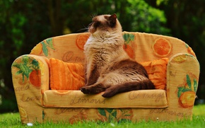 Picture greens, cat, summer, grass, cat, pose, heat, sofa, glade, pillow, garden, bending, profile, sitting, sofa, …