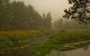 Wallpaper Forest, fog, swamp