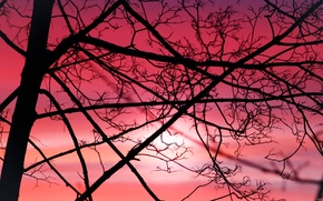 Picture the sky, the sun, sunset, branches, nature, sunrise, tree, dawn, blood