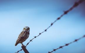 Picture bird, wire, Owl
