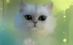Picture white, eyes, cat, apofiss