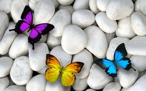 Picture butterfly, stones, colorful, butterflies, design by Marika, white stones