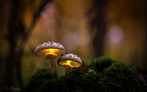 Wallpaper autumn, forest, macro, light, nature, mushrooms