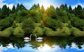 Wallpaper the sun, animals, reflection, swans, river, forest