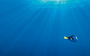 Wallpaper sea, bubbles, blue, cartoon, fish, rays of light, Dori, Finding Dory, In finding Dory