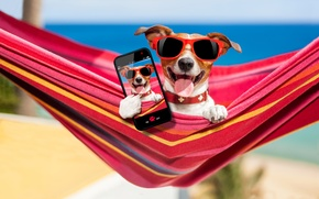 Picture sand, sea, beach, photo, stay, glasses, hammock, bokeh, smartphone, Jack Russell Terrier