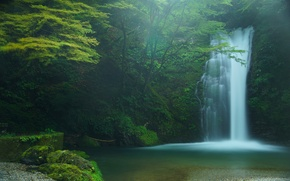 Picture Japan, waterfall, trees, Japan, Fujinomiya, Fujinomiya, Shiraito Falls, Shiraito falls, forest