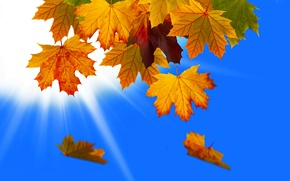 Picture autumn, the sky, leaves, macro, rays, nature, collage, Vset