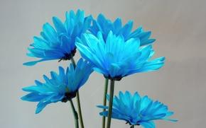 Picture paint, bouquet, petals, stem