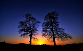 Picture the sky, trees, sunset, silhouette, glow