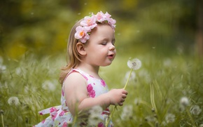 Picture summer, dandelion, girl