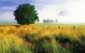 Wallpaper field, the sky, grass, tree