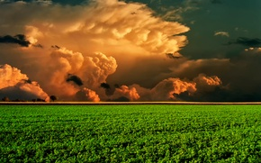 Picture field, the sky, clouds, horizon