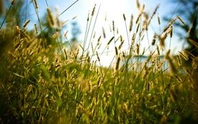 Picture summer, grass, through the grass