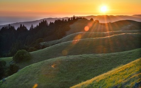 Picture forest, grass, the sun, rays, Rosa, glare, hills, morning