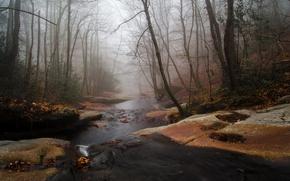 Picture autumn, forest, fog, river, stream, stream