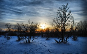 Picture winter, snow, trees, landscape, sunset, nature, the evening, Maroz