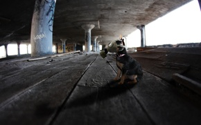 Picture background, dog, gas mask