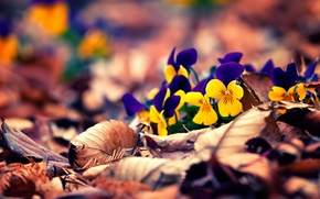 Picture autumn, leaves, flowers, flowers, autumn, leaves, bokeh, bokeh