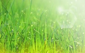 Picture greens, drops, macro, rays, freshness, Rosa, weed, the sun