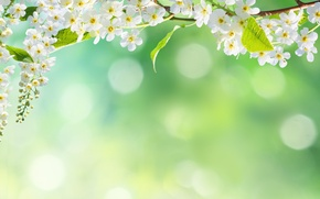 Wallpaper flowers, bokeh, tree, petals, nature, spring