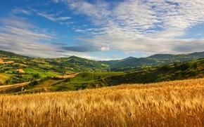 Picture summer, grass, cloud, hills, wheat