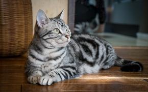 Picture cat, cat, grey